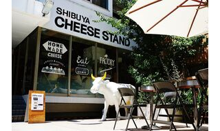 CHEESE STAND in GIFU